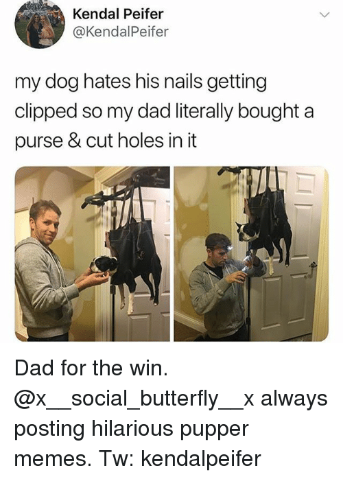 Dad, Memes, and Holes: Kendal Peifer  @KendalPeifer  my dog hates his nails getting  clipped so my dad literally bought a  purse & cut holes in it Dad for the win. @x__social_butterfly__x always posting hilarious pupper memes. Tw: kendalpeifer