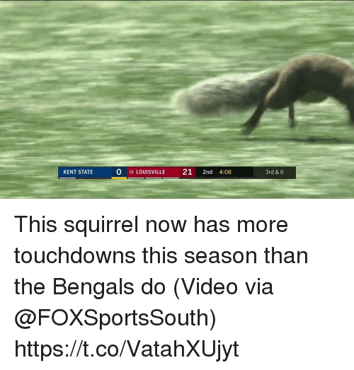 Sports, Bengals, and Squirrel: KENT STATE  0 19 LOUISVILLE 21 2nd 4:08  3rd & 6 This squirrel now has more touchdowns this season than the Bengals do   (Video via @FOXSportsSouth) https://t.co/VatahXUjyt