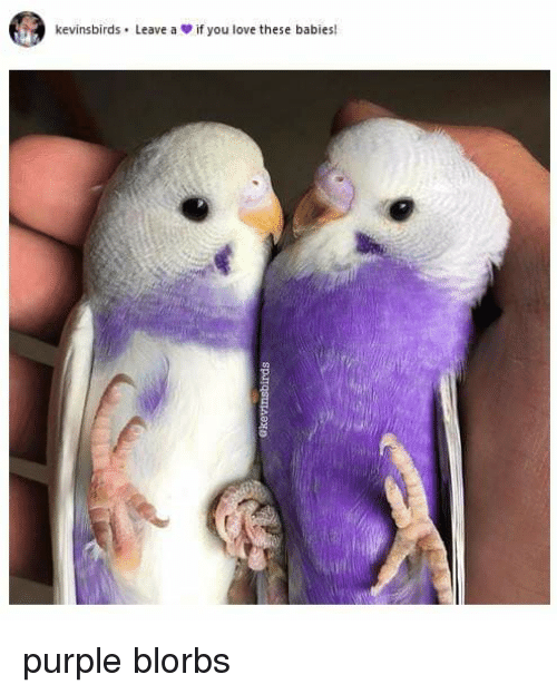 Love, Purple, and Babies: kevinsbirds . Leave a  if you love these babies! purple blorbs