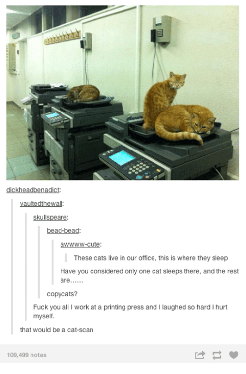 cat scan: kh  vaultedthewalle  skulls  are  bead-bead  awWWW-cute:  These cats live in our office, this is where they sleep  Have you considered only one cat sleeps there, andthe rest  are  copycats?  Fuck you all I work at a printing press and I laughed so hard I hurt  myself.  that would be a cat-Scan  109,499 notes