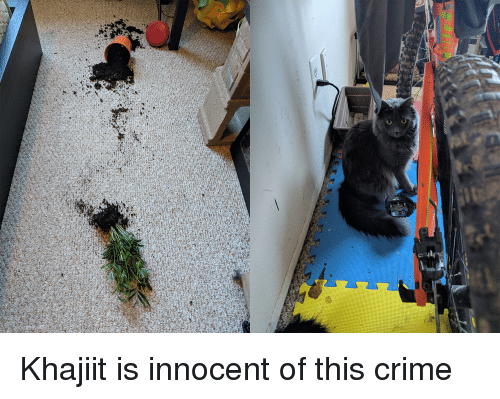 Crime, This, and Innocent: Khajiit is innocent of this crime