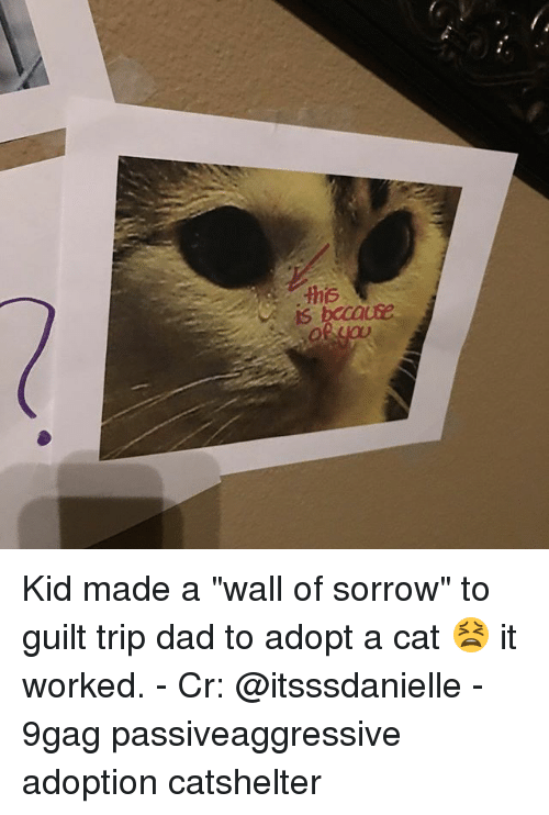 "9gag, Dad, and Memes: Kid made a ""wall of sorrow"" to guilt trip dad to adopt a cat 😫 it worked. - Cr: @itsssdanielle - 9gag passiveaggressive adoption catshelter"