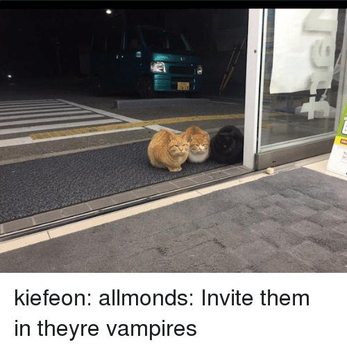 Tumblr, Blog, and Http: kiefeon:  allmonds:  Invite them in  theyre vampires
