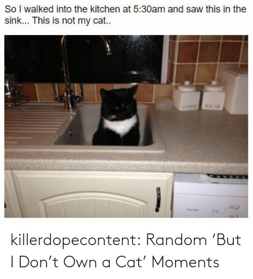 a cat: killerdopecontent:  Random 'But I Don't Own a Cat' Moments