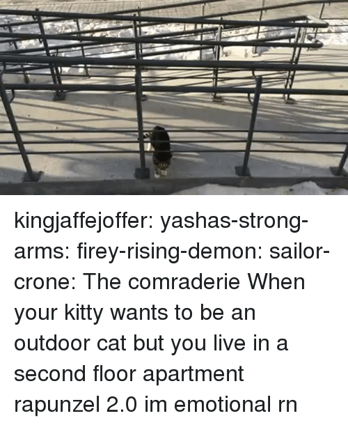 Rapunzel, Target, and Tumblr: kingjaffejoffer:  yashas-strong-arms:  firey-rising-demon:  sailor-crone: The comraderie   When your kitty wants to be an outdoor cat but you live in a second floor apartment   rapunzel 2.0  im emotional rn