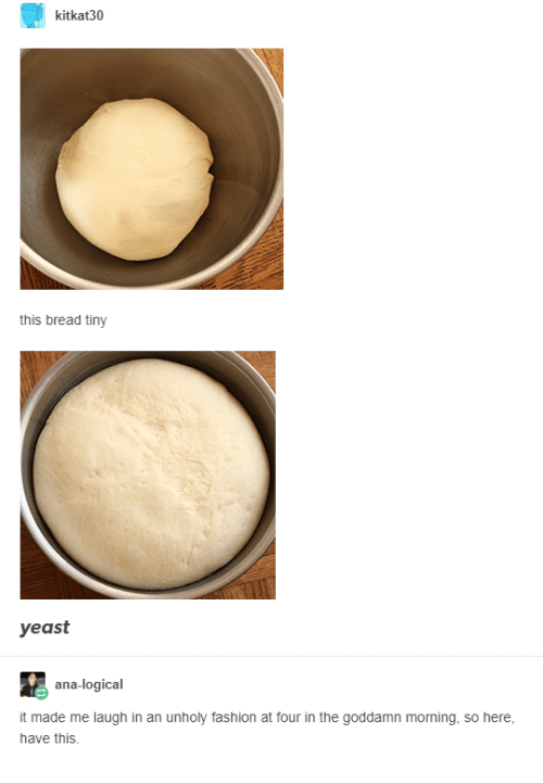 ana: kitkat30  this bread tiny  yeast  ana-logical  it made me laugh in an unholy fashion at four in the goddamn moning, so here,  have this