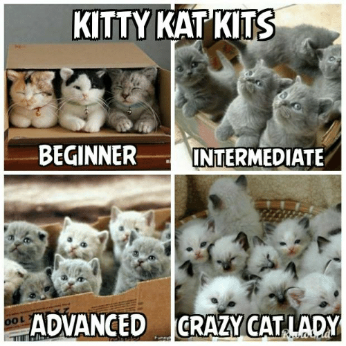 Crazy, Memes, and 🤖: KITTY KAT KITS  BEGINNER  INTERMEDIATE  CRAZY CAT LADY  ADVANCED  OOL  Funnyt