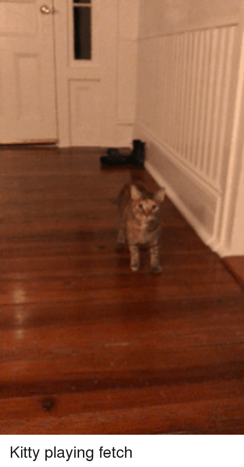 Fetch, Kitty, and Playing: Kitty playing fetch