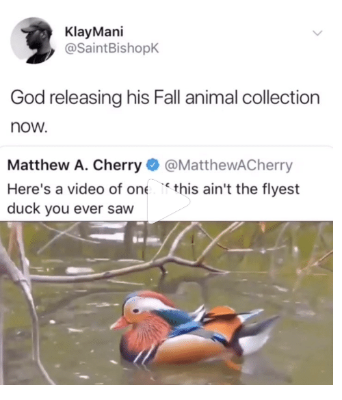 Fall, God, and Saw: KlayMani  @SaintBishopK  God releasing his Fall animal collection  now  Matthew A. Cherry@MatthewACherry  Here's a video of one this ain't the flyest  duck you ever saw