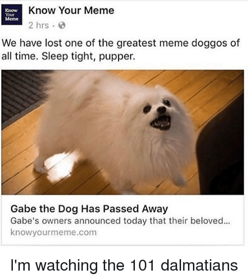 know your meme: Know  Know Your Meme  Your  Meme  2 hrs  We have lost one of the greatest meme doggos of  all time. Sleep tight, pupper.  Gabe the Dog Has Passed Away  Gabe's owners announced today that their beloved...  know yourme  .com I'm watching the 101 dalmatians