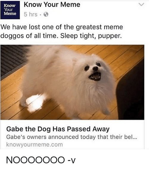 know your meme: Know Your Meme  Know  Your  Meme  5 hrs  We have lost one of the greatest meme  doggos of all time. Sleep tight, pupper.  Gabe the Dog Has Passed Away  Gabe's owners announced today that their bel...  knowyourmeme.com NOOOOOOO -v