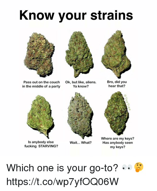 Fucking, Memes, and Party: Know your strains  Pass out on the couch  in the middle of a party  Ok, but like, aliens.  Ya know?  Bro, did you  hear that?  Is anybody else  fucking STARVING?  Where are my keys?  Has anybody seen  my keys?  Wait... What? Which one is your go-to? 👀🤔 https://t.co/wp7yfOQ06W