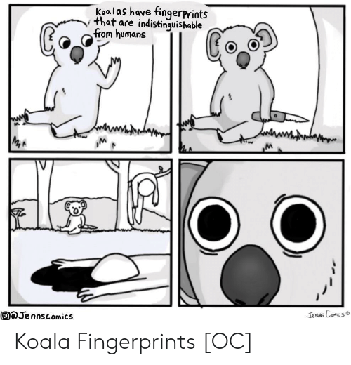 koala: Koalas have fingerprints  that are indistinquishable  trom humans  aJennscomics  JeNNS Comes Koala Fingerprints [OC]