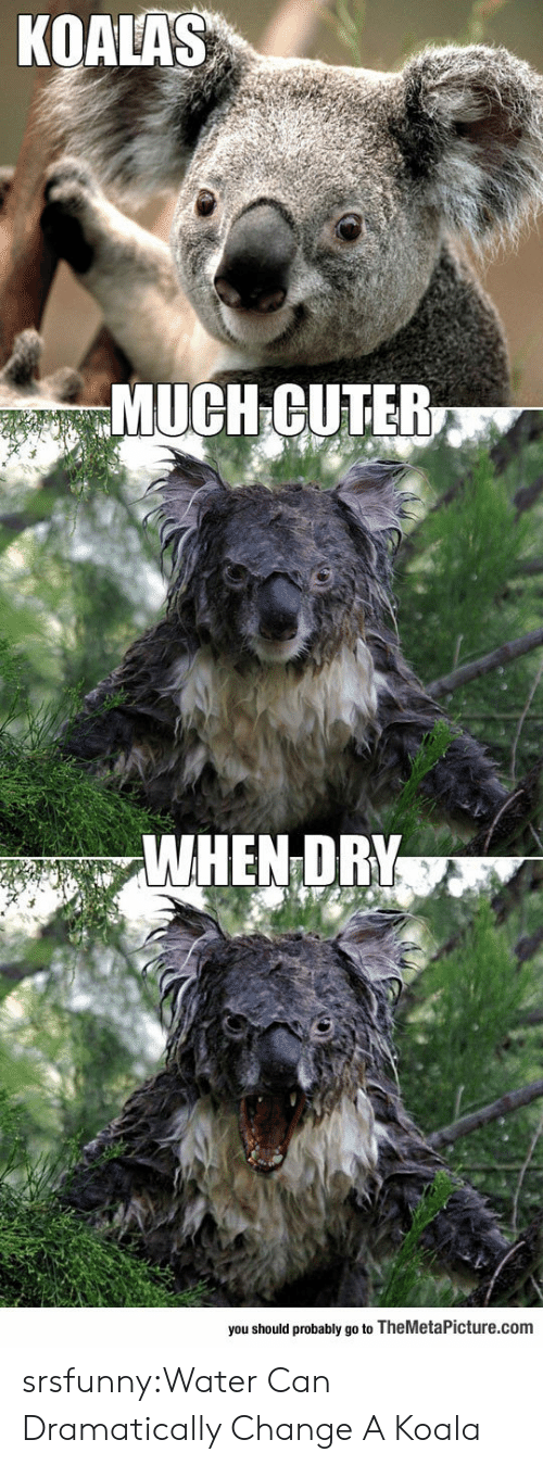koala: KOALAS  MUCH GUTER  WHEN DR  you should probably go to TheMetaPicture.com srsfunny:Water Can Dramatically Change A Koala