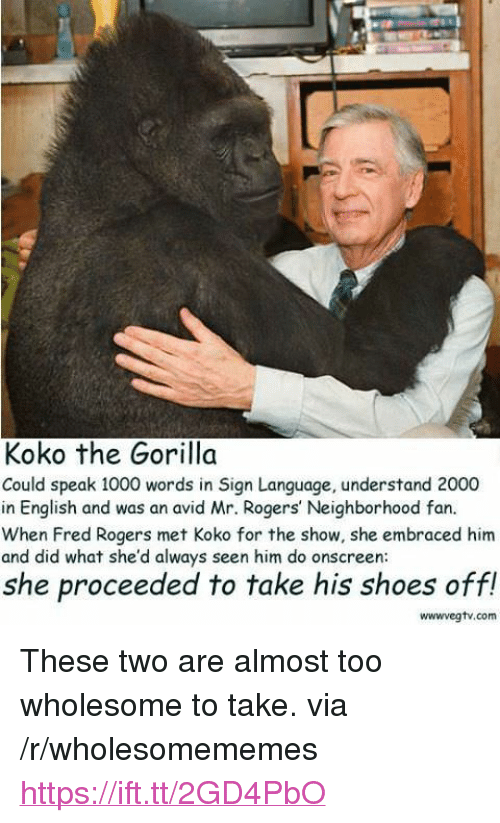 "fred rogers: Koko the Gorilla  Could speak 1000 words in Sign Language, understand 2000  in English and was an avid Mr. Rogers' Neighborhood fan.  When Fred Rogers met Koko for the show, she embraced him  and did what she'd always seen him do onscreen  she proceeded to take his shoes off!  wwwvegtv.com <p>These two are almost too wholesome to take. via /r/wholesomememes <a href=""https://ift.tt/2GD4PbO"">https://ift.tt/2GD4PbO</a></p>"