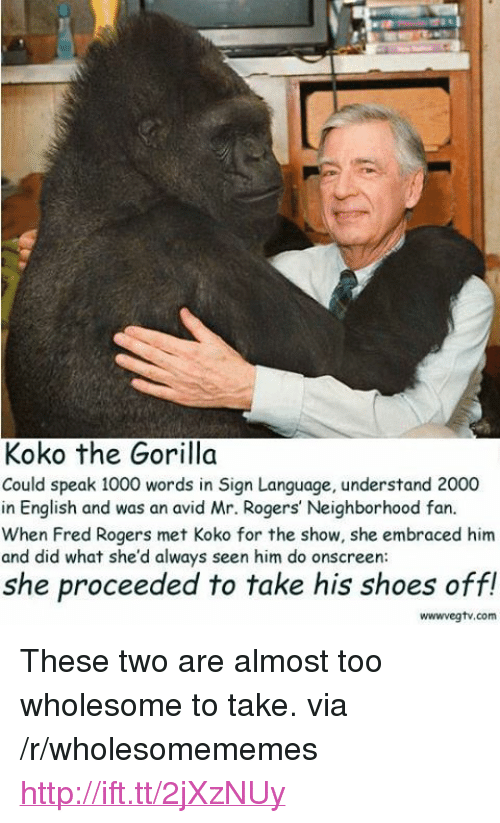 "fred rogers: Koko the Gorilla  Could speak 1000 words in Sign Language, understand 2000  in English and was an avid Mr. Rogers' Neighborhood fan.  When Fred Rogers met Koko for the show, she embraced him  and did what she'd always seen him do onscreen  she proceeded to take his shoes off!  wwwvegtv.com <p>These two are almost too wholesome to take. via /r/wholesomememes <a href=""http://ift.tt/2jXzNUy"">http://ift.tt/2jXzNUy</a></p>"