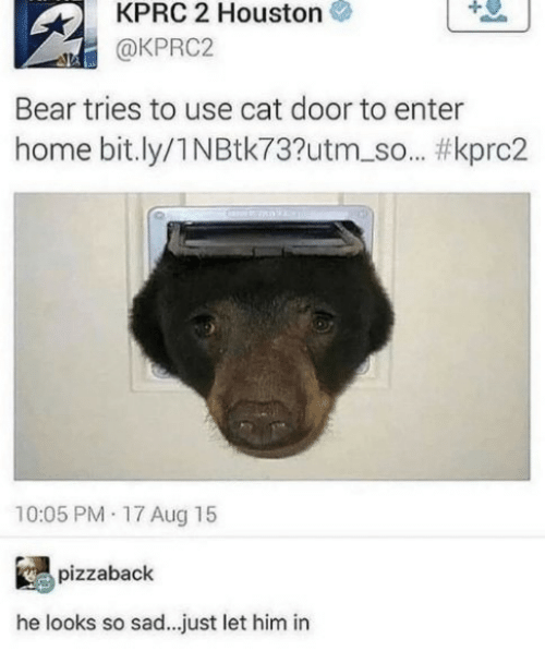 Bear, Home, and Houston: KPRC 2 Houston  @KPRC2  Bear tries to use cat door to enter  home bit.ly/1NBtk73?utm_so... #kprc2  10:05 PM 17 Aug 15  pizzaback  he looks so sad.. .just let him in