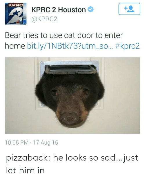Tries: KPRC  KPRC 2 Houston  @KPRC2  1  Bear tries to use cat door to enter  home bit.ly/1 N Btk73?utm-so.. #kprc2  10:05 PM 17 Aug 15 pizzaback:  he looks so sad…just let him in