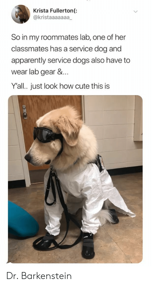 gear: Krista Fullerton(:  @kristaaaaaaa  So in my roommates lab, one of her  classmates has a service dog and  apparently service dogs also have to  wear lab gear &...  Y'all. just look how cute this is Dr. Barkenstein