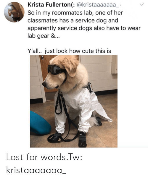 Apparently, Cute, and Dogs: Krista Fullerton(: @kristaaaaaaa  So in my roommates lab, one of her  classmates has a service dog and  apparently service dogs also have to wear  lab gear &...  Y'all.. just look how cute this is Lost for words.Tw: kristaaaaaaa_