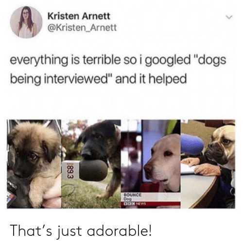 "Kristen: Kristen Arnett  @Kristen Arnett  everything is terrible so i googled ""dogs  being interviewed"" and it helped  BOUNCE  Dog  0ON NEWS  89.3 That's just adorable!"