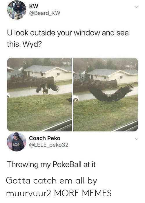 throwing: KW  @Beard_KW  U look outside your window and see  this. Wyd?  Coach Peko  @LELE_peko32  Throwing my PokeBall at it Gotta catch em all by muurvuur2 MORE MEMES