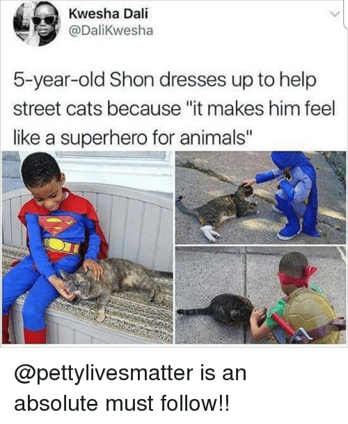 """Animals, Cats, and Memes: Kwesha Dali  @DaliKwesha  5-year-old Shon dresses up to help  street cats because """"it makes him feel  like a superhero for animals @pettylivesmatter is an absolute must follow!!"""