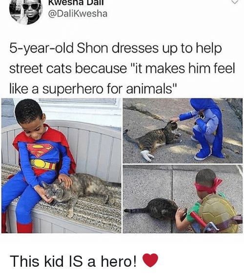 """Animals, Cats, and Memes: Kwesha Dall  @Dalikwesha  5-year-old Shon dresses up to help  street cats because """"it makes him feel  like a superhero for animals"""" This kid IS a hero! ❤️"""