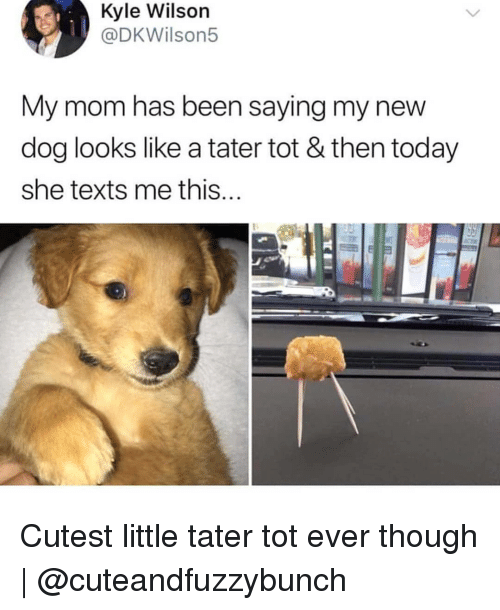 Memes, Today, and Fat: Kyle Wilson  @DKWilson5  My mom has been saying my new  dog looks like a tater tot & then today  she texts me this  FAt Cutest little tater tot ever though | @cuteandfuzzybunch