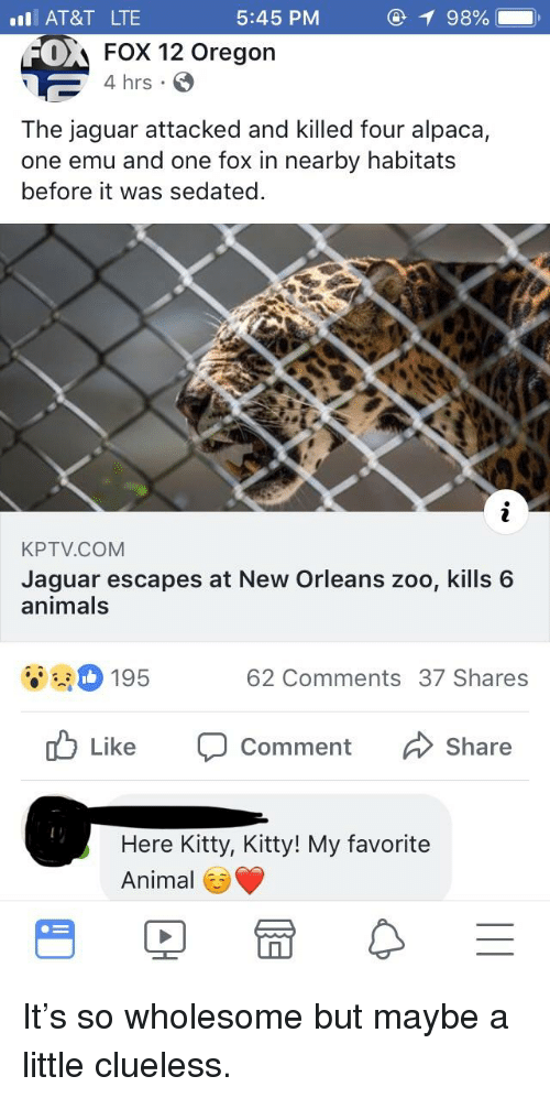 Animals, Animal, and At&t: l AT&T LTE  5:45 PM  0  A Fox 12 Oregon  4 hrs  The jaguar attacked and killed four alpaca,  one emu and one fox in nearby habitats  before it was sedated  KPTV.COM  Jaguar escapes at New Orleans zoo, kills 6  animals  195  62 Comments 37 Shares  Like  Comment  Share  Here Kitty, Kitty! My favorite  Animal E