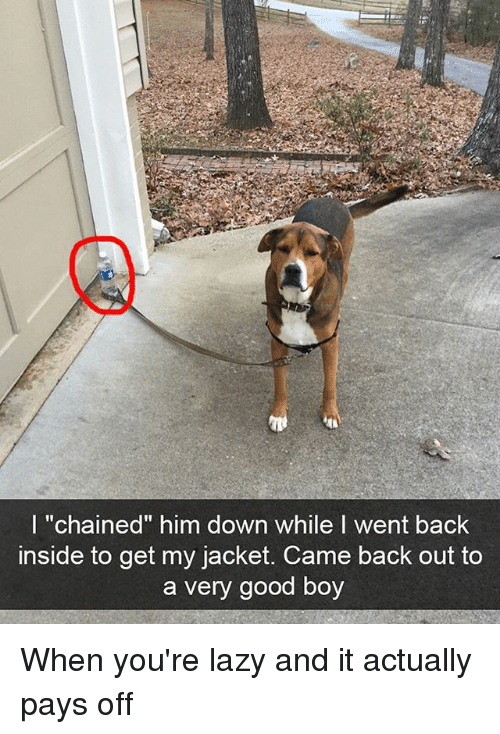 """Funny, Lazy, and Good: l """"chained"""" him down while I went back  inside to get my jacket. Came back out to  a very good boy When you're lazy and it actually pays off"""