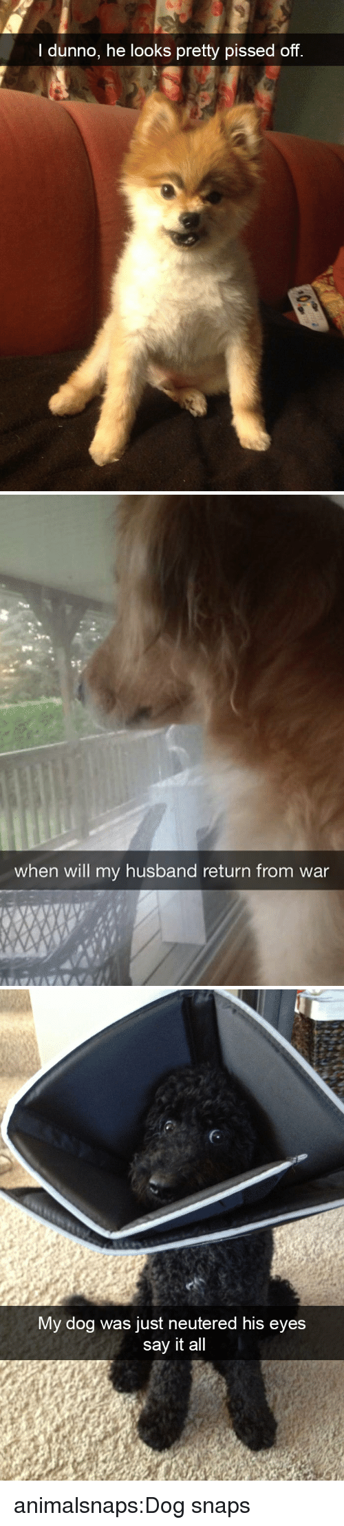 Target, Tumblr, and Say It: l dunno, he looks pretty pissed off   when will my husband return from war   My dog was just neutered his eyes  say it all animalsnaps:Dog snaps