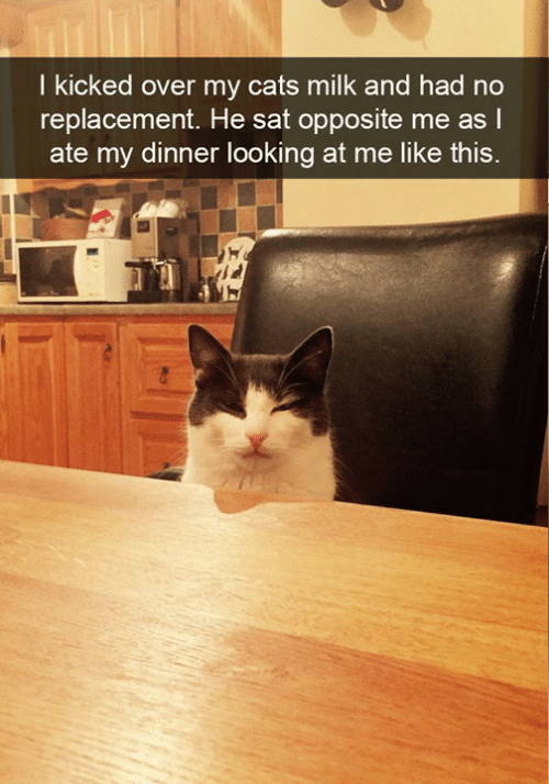Cats, Memes, and 🤖: l kicked over my cats milk and had no  replacement. He sat opposite me as  ate my dinner looking at me like this