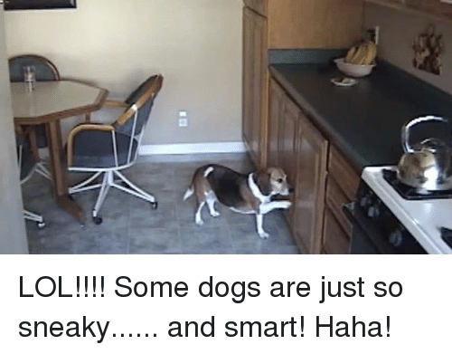 Dogs, Memes, and 🤖: l) LOL!!!! Some dogs are just so sneaky...... and smart! Haha!