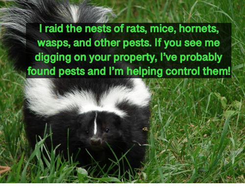 Memes, Control, and 🤖: l raid the nests of rats, mice, hornets,  wasps, and other pests. If you see me  digging on your property, I've probably  found pests and I'm helping control them!