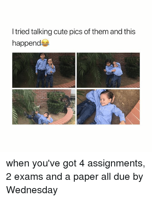 Cute, Wednesday, and Girl Memes: l tried talking cute pics of them and this  happend when you've got 4 assignments, 2 exams and a paper all due by Wednesday
