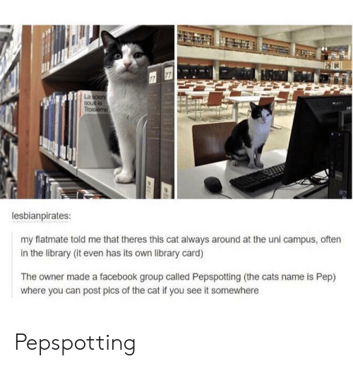 Cats, Facebook, and Library: La  Trois  lesbianpirates:  my flatmate told me that theres this cat always around at the uni campus, often  in the library (it even has its own library card)  The owner made a facebook group called Pepspotting (the cats name is Pep)  where you can post pics of the cat if you see it somewhere Pepspotting