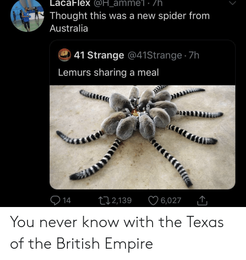 Meal: LacaFlex @H_amme1 . /h  Thought this was a new spider from  Australia  41 Strange @41 Strange 7h  Lemurs sharing a meal  14  12,139  6,027 You never know with the Texas of the British Empire
