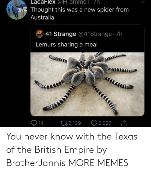 Meal: LacaFlex @H_amme1: /h.  Thought this was a new spider from  Australia  41 Strange @41 Strange 7h  Lemurs sharing a meal  14  2,139  6,027 You never know with the Texas of the British Empire by BrotherJannis MORE MEMES