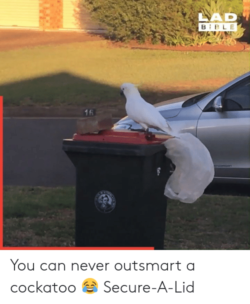 Dank, Never, and 🤖: LAD  B BLE  16 You can never outsmart a cockatoo 😂  Secure-A-Lid