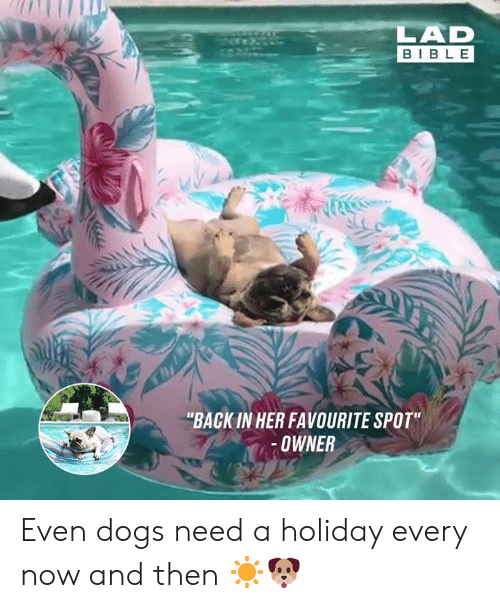 "Dank, Dogs, and Back: LAD  BIB L E  ""BACK IN HER FAVOURITE SPOT  OWNER Even dogs need a holiday every now and then ☀️🐶"