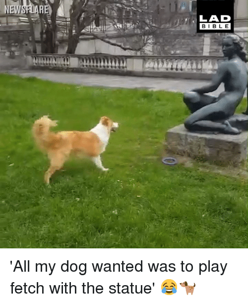 Dank, 🤖, and Dog: LAD  BIBL E 'All my dog wanted was to play fetch with the statue' 😂🐕