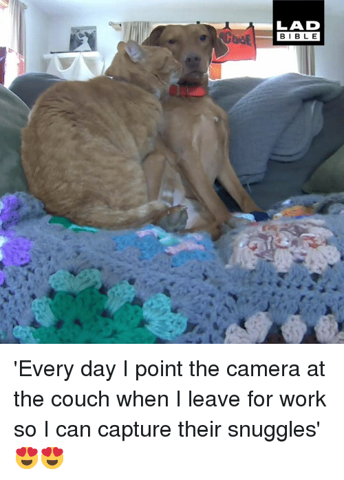 Dank, Work, and Camera: LAD  BIBL E 'Every day I point the camera at the couch when I leave for work so I can capture their snuggles' 😍😍