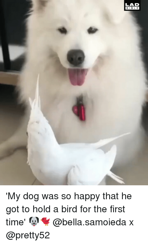 Memes, Happy, and Time: LAD  BIBL E 'My dog was so happy that he got to hold a bird for the first time' 🐶🐦 @bella.samoieda x @pretty52