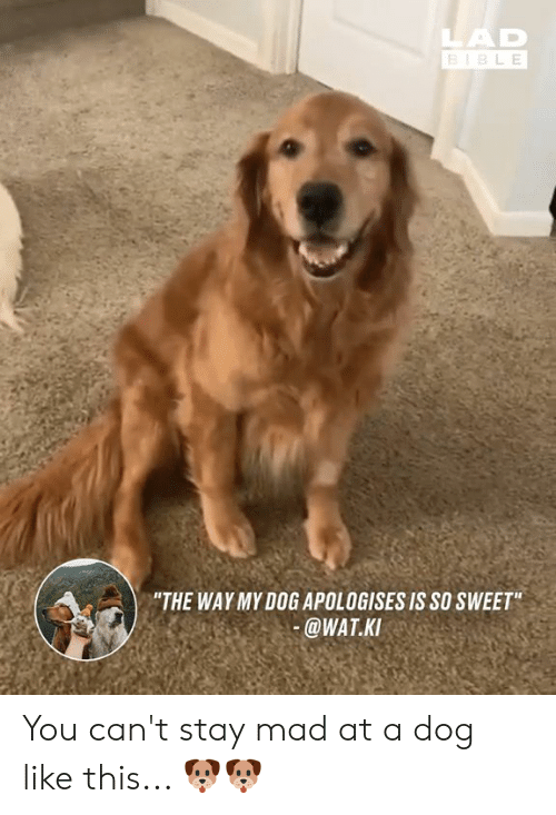 """Dank, Wat, and Mad: LAD  BIBL E  """"THE WAYMY DOG APOLOGISES IS SO SWEET  @WAT.K You can't stay mad at a dog like this... 🐶🐶"""