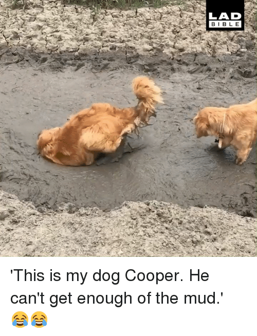 Dank, 🤖, and Dog: LAD  BIBL E 'This is my dog Cooper. He can't get enough of the mud.' 😂😂