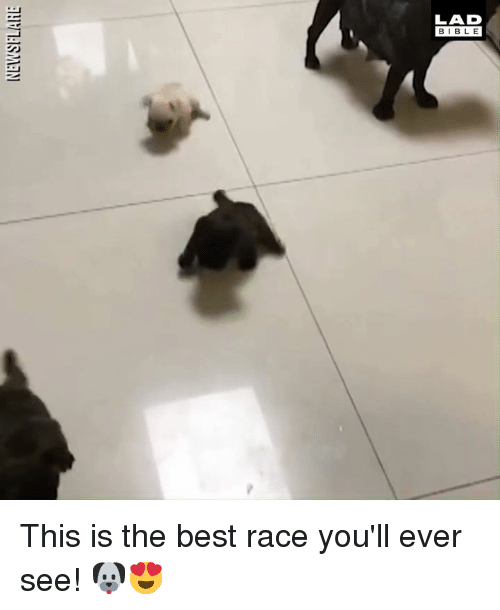 Dank, Best, and Race: LAD  BIBL E This is the best race you'll ever see! 🐶😍