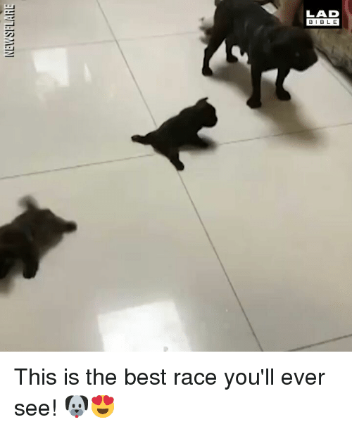 Memes, Best, and Race: LAD  BIBL E This is the best race you'll ever see! 🐶😍