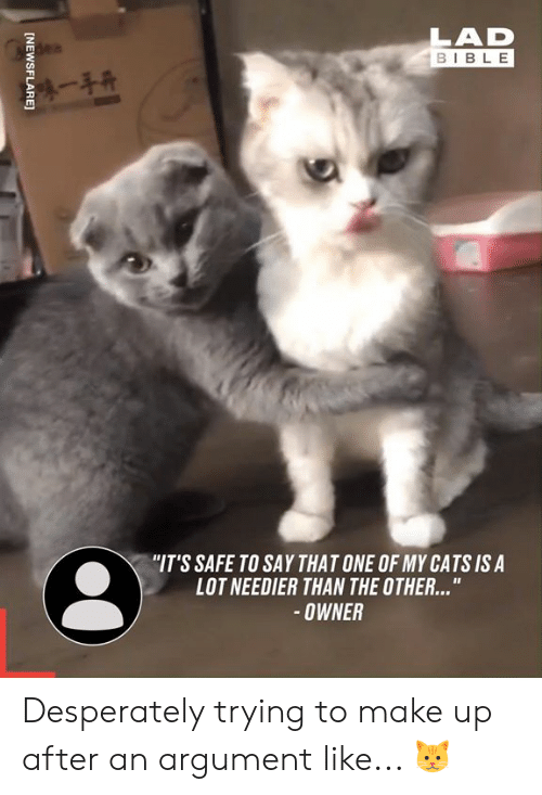 """Cats, Dank, and Bible: LAD  BIBLE  陳一手开  """"IT'S SAFE TO SAY THAT ONE OF MY CATS IS A  LOT NEEDIER THAN THE OTHER...""""  OWNER  [NEWSFLARE] Desperately trying to make up after an argument like... 🐱"""