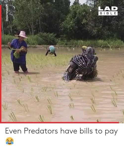 Dank, Bible, and Bills: LAD  BIBLE  AWE  VIRALHOG] Even Predators have bills to pay 😂